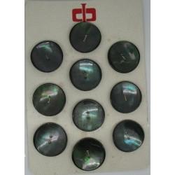 Plaque N°53 : 10 trocas vert acier 31mm